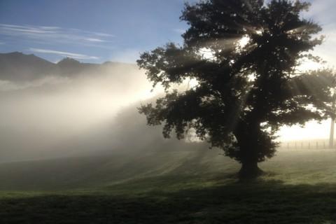 arbre solaire